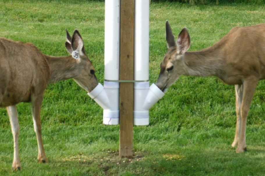 Pvc deer feeder for How to build a deer feeder out of pvc pipe