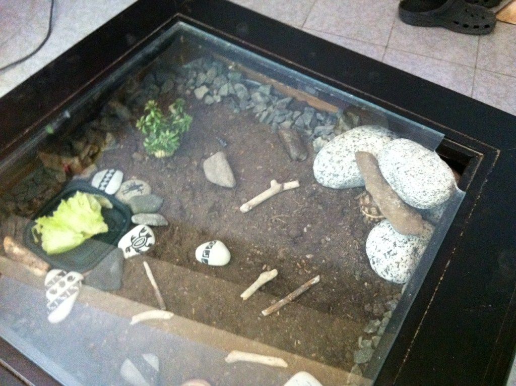 Coffee Table Tortoise Terrarium