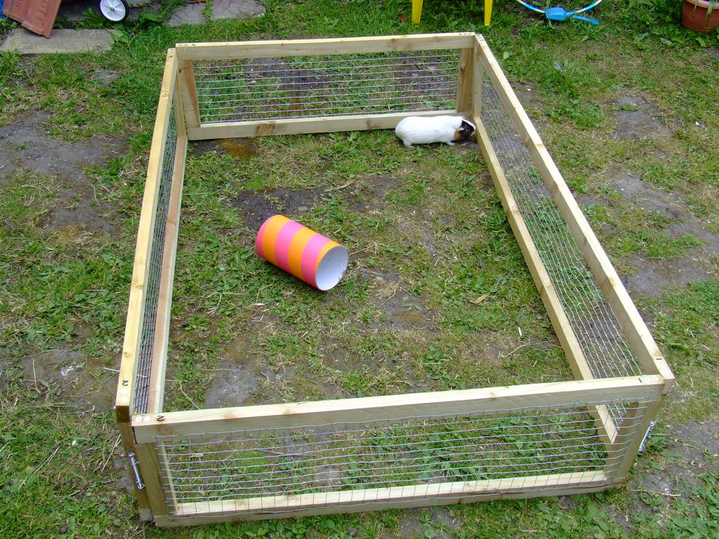 diy guinea pig run