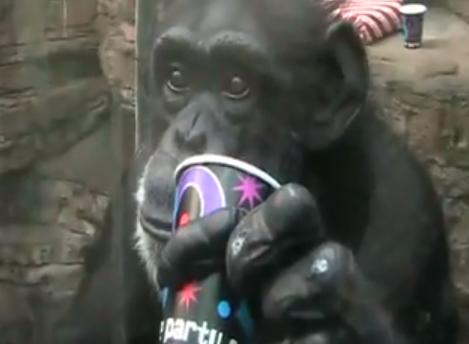 http://www.petdiys.com/wp-content/uploads/2013/02/DIY-Monkey-Birthday-Party.png