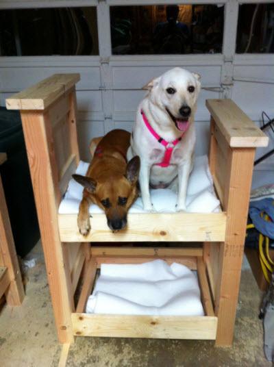 Diy Dog Bunk Bed Petdiys Com