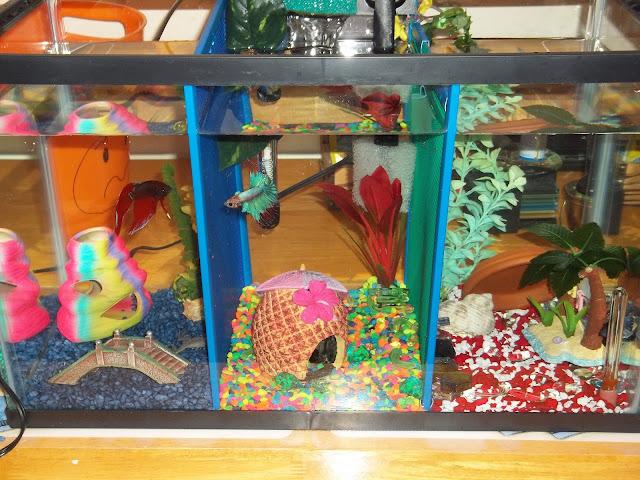 Diy mesh aquarium dividers for Betta fish tank decorations