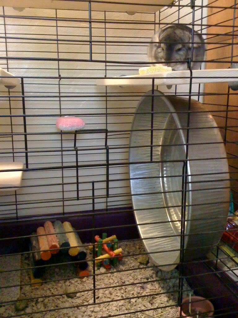 ... Related: Homemade Chinchilla Cage , Diy Chinchilla Cage Plans