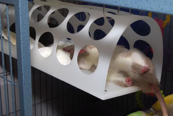 Bag Dispenser Rat Hammock Petdiys Com