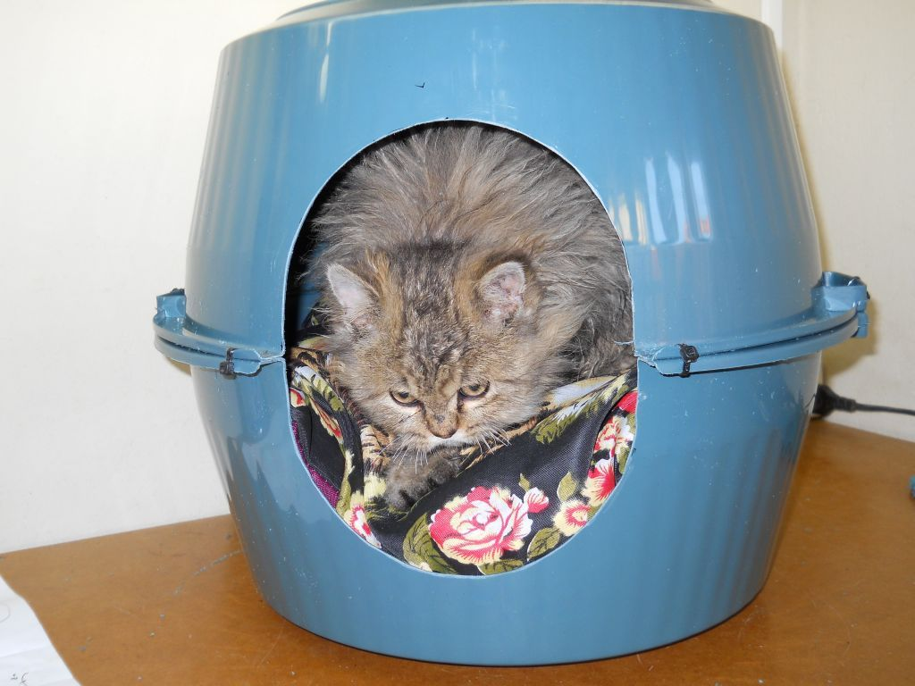 Diy Plastic Bowl Cat Cave