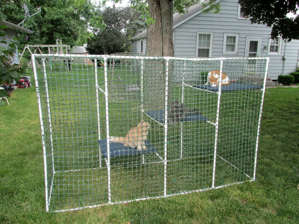 Backyard Enclosures For Dogs : PVC Cat Enclosure  PetDIYscom