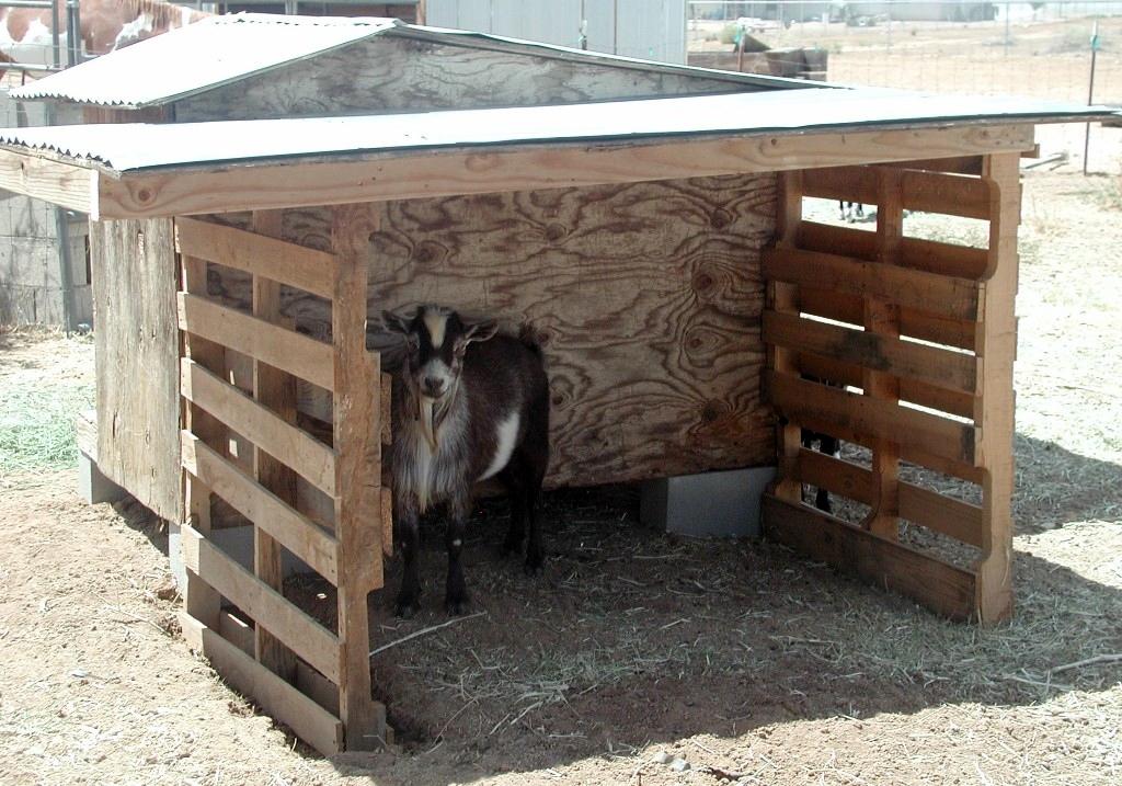 Diy goat house